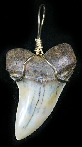 Fossil Mako Tooth Pendant - Bakersfield, CA