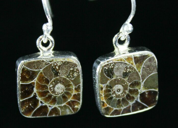 Fossil Ammonite Earrings - Sterling Silver