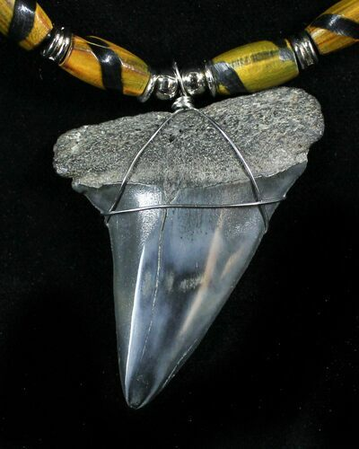Fossil Mako Shark Tooth Necklace
