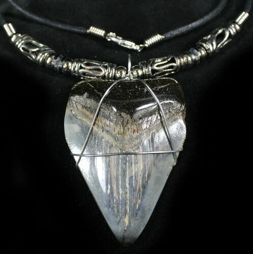 "2.2"" Juvenile Megalodon Tooth Necklace"