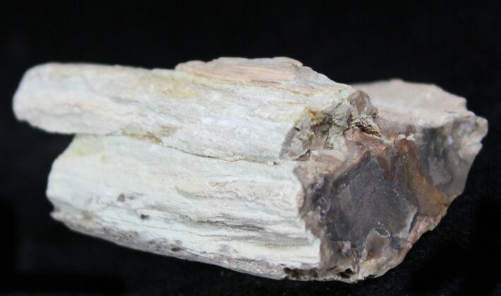 Petrified Wood Limb Chunk - Madagascar