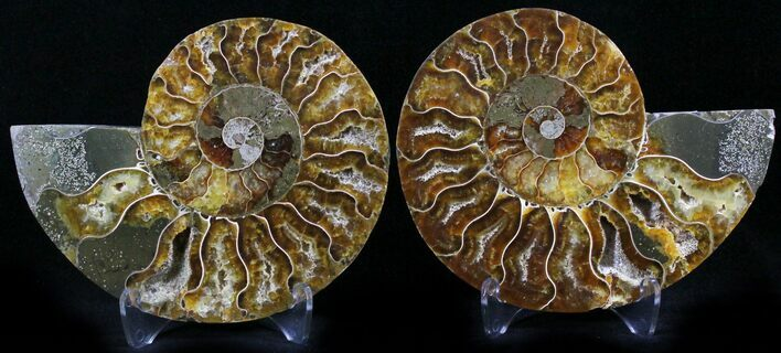 "3.8"" Polished Ammonite Pair - 110 Million Years"