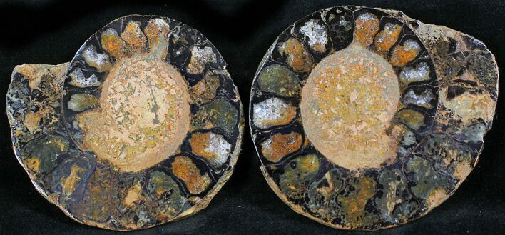 "2.4"" Iron Replaced Ammonite Fossil Pair"
