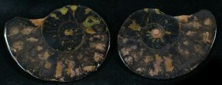 "1.4"" Iron Replaced Ammonite Fossil Pair For Sale, #27458"