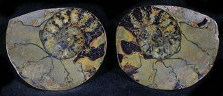 "Buy 1.3"" Iron Replaced Ammonite Fossil Pair - #27469"