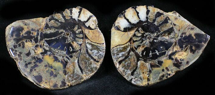 "1.5"" Iron Replaced Ammonite Fossil Pair"