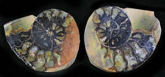 "Buy 1.4"" Iron Replaced Ammonite Fossil Pair - #27475"