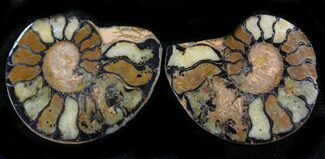 "Buy 1.1"" Iron Replaced Ammonite Fossil Pair - #27487"