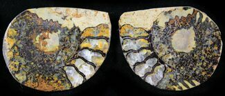 "1.3"" Iron Replaced Ammonite Fossil Pair For Sale, #27497"