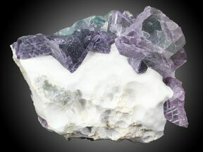 Fluorite - Fossils For Sale - #31854
