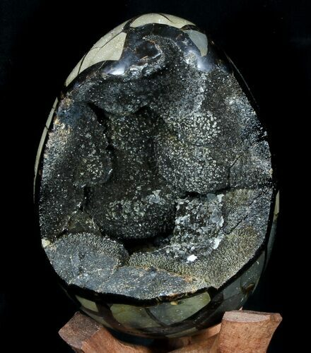 "5.8"" Septarian ""Dragon Egg"" Geode - Brown Crystals"