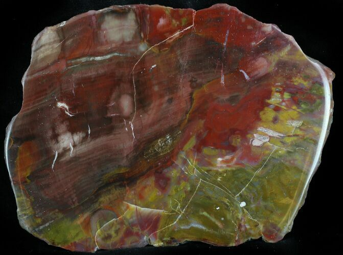 "4.2"" Jurassic Petrified Wood Slab - Henry Mountain"