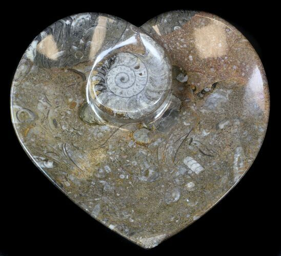 "Bargain, 6.5"" Heart Shaped Fossil Goniatite Dish"