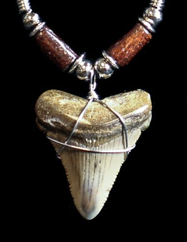 Fossil Angustiden Tooth Necklace - Megalodon Ancestor
