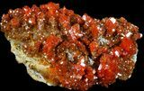 "2.5"" Brilliant Red Vanadinite Crystal Cluster - Morocco - #36976-1"