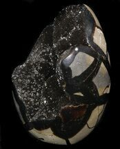 "Buy 4.5"" Polished Septarian Geode Sculpture - Black Crystals - #37129"