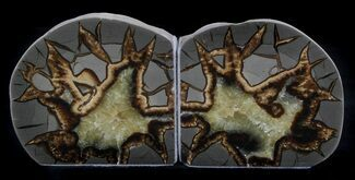 "Buy 4.4"" Polished Septarian Bookends  - #37243"