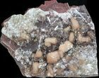 "3.9"" Pink Poldervaartite/Olmiite On Matrix - South Africa - #37752-1"