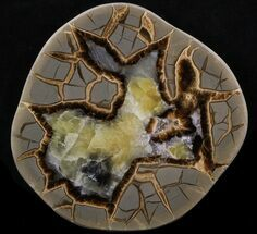 Septarian - Fossils For Sale - #38400
