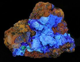 "2.2"" Very Vibrant Botryoidal Azurite Specimen For Sale, #38558"