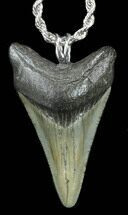 "1.9"" Polished Megalodon Tooth Necklace For Sale, #38540"
