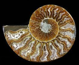 "3.05"" Agatized Ammonite Fossil (Half)  For Sale, #38774"