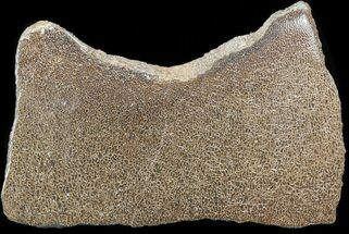 "Large Polished Agatized Dinosaur Bone Section - 5.3"" For Sale, #38801"