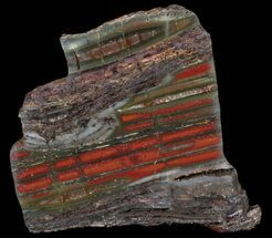 "Buy 3.4"" Stromatolite Slice - Pilbara, Australia (2.7 Billion Years) - #39046"