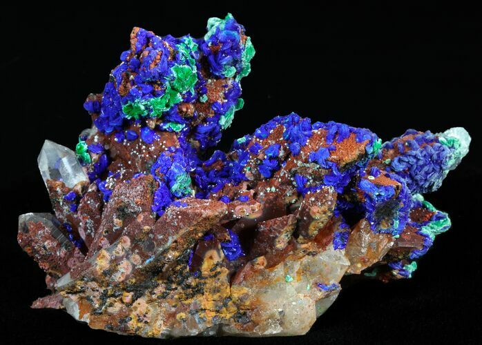 "3.0"" Vivid Azurite on Malachite With Quartz - Morocco"