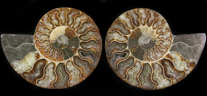 "4.45"" Polished Ammonite Pair - Agatized"