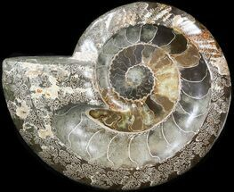 "9.6"" Wide Polished Ammonite 'Dish' For Sale, #41639"