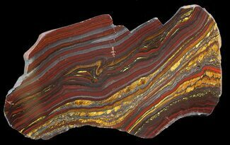 "Buy 5.8"" Polished Tiger Iron Stromatolite - (2.7 Billion Years) - #42589"
