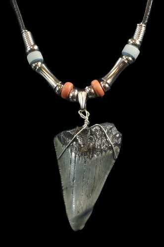 "1.8"" Megalodon Tooth Necklace"