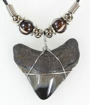 "Buy 1.4"" Polished Megalodon Tooth Necklace - #43174"