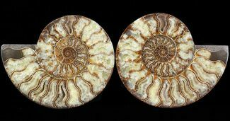 "8"" Cut & Polished Ammonite Pair - Agatized For Sale, #43640"