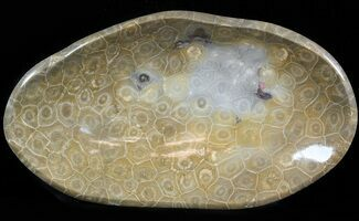 "9.8"" Polished Fossil Coral (Hexagonaria) Bowl - Morocco For Sale, #45224"