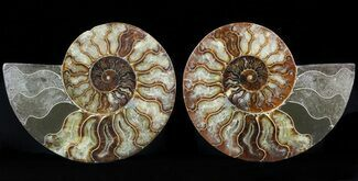 "6.6"" Cut/Polished Ammonite Pair - Agatized For Sale, #47693"