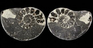 Unidentified - Fossils For Sale - #48093