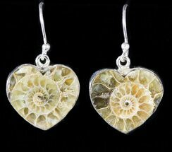 Fossil Ammonite Earrings - Sterling Silver For Sale, #48731