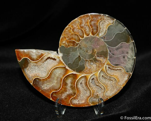 Gorgous 3.3 Inch Split Ammonite (Half)