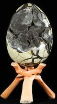 Septarian with Calcite  - Fossils For Sale - #50823