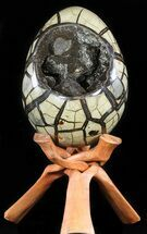 "Buy Huge, 9.5"" Septarian ""Dragon Egg"" Geode - Crystal Filled - #50824"
