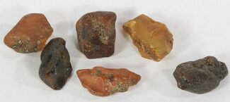 Amber - Fossils For Sale - #51594