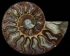 "4.3"" Polished Ammonite Fossil (Half) - Agatized For Sale, #51779"