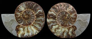"Buy 8.8"" Cut & Polished Ammonite Pair - Agatized - #51241"