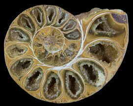 "Buy 3.2"" Sliced, Agatized Ammonite Fossil (Half) - Jurassic - #54019"