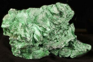 "Buy 3.8"" Silky, Fibrous Malachite Crystal Cluster - Congo - #45331"