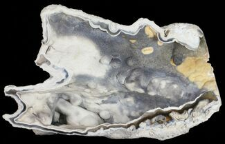 "8.5"" Beautiful, Agatized Fossil Coral Geode - Florida For Sale, #57673"