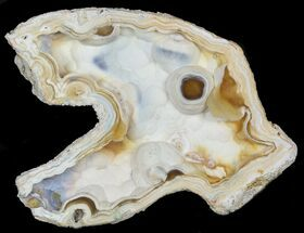 "5.4"" Unique, Agatized Fossil Coral Geode - Florida For Sale, #57716"