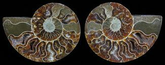 "3.7"" Polished Ammonite Pair - Agatized For Sale, #59462"